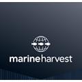 Praca Marine Harvest